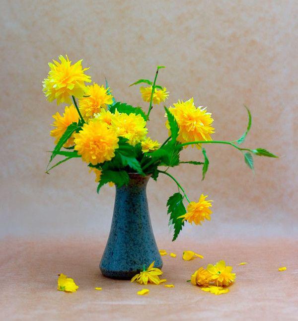 Images bouquet de fleurs page 5 for Bouquet de fleurs 5