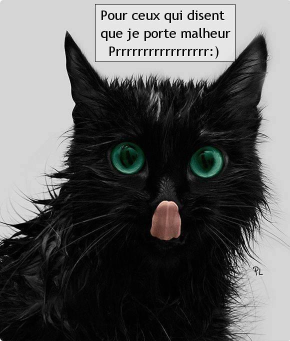 Images chats rigolos page 3 - Images de chats rigolos ...