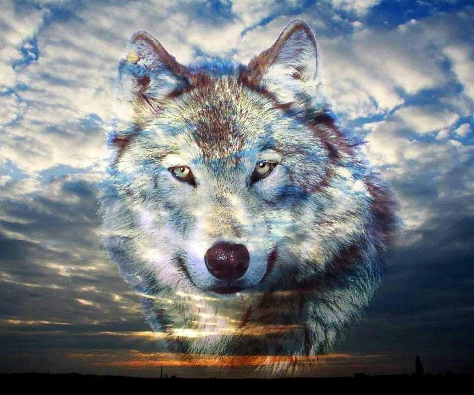 wolf song download